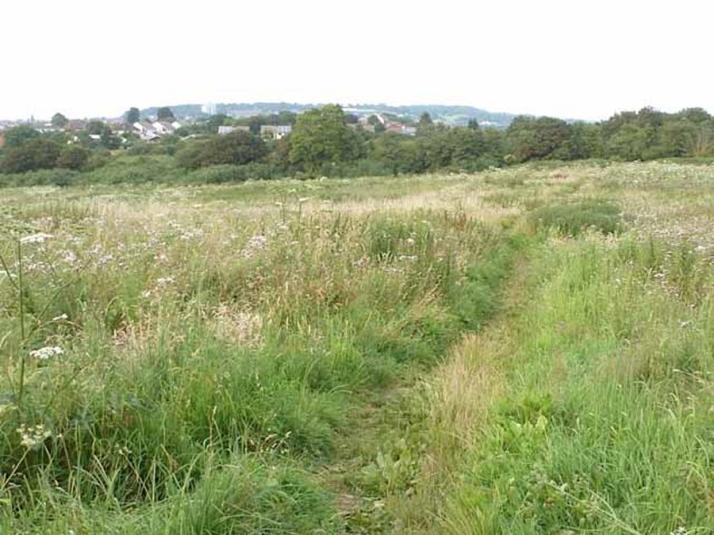 glebe fields 2