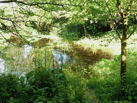 glebe pond